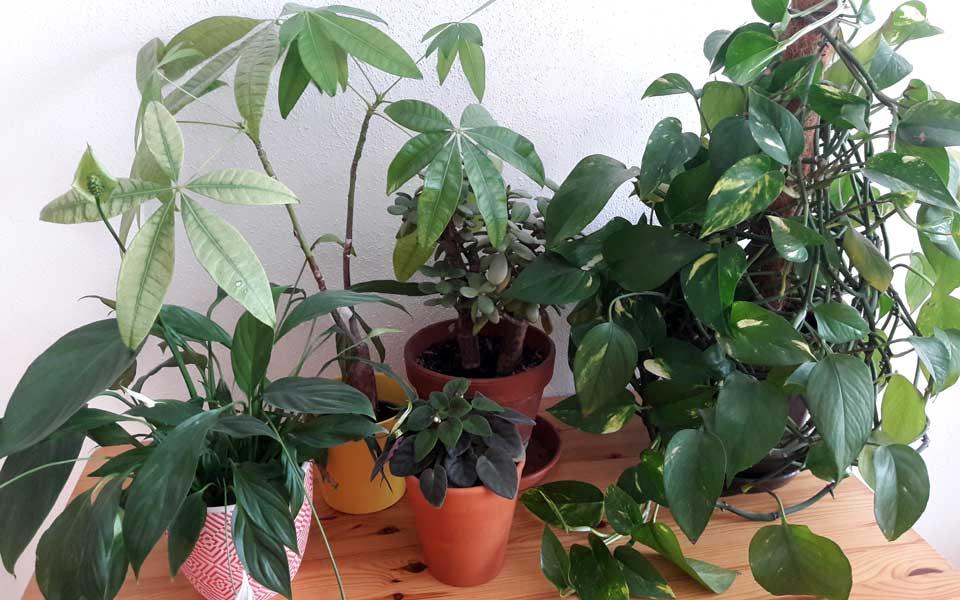 Pflanzen im Klassenzimmer – ja, bitte!