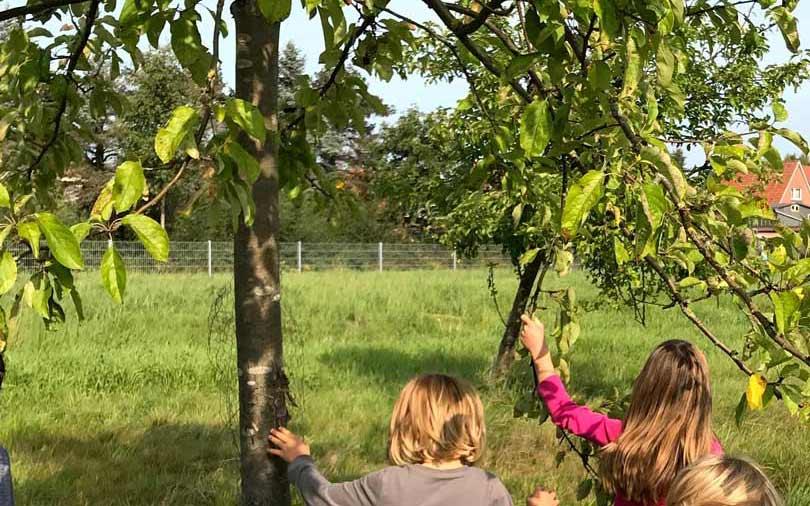 Von der Raupe Nimmersatt und dem gesunden Essen – Ein Vorschulprojekt | Teil 2